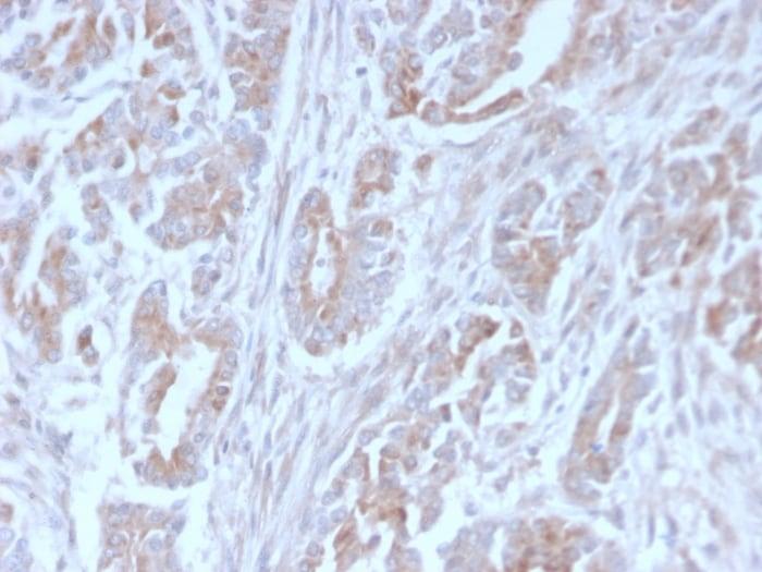 Immunohistochemistry (Formalin/PFA-fixed paraffin-embedded sections) - Anti-ICOS Ligand/ICOSL antibody [ICOSL/3111] - BSA and Azide free (ab259280)