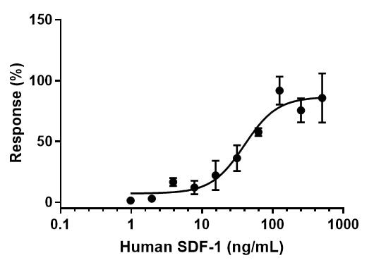 Functional Studies - Recombinant human SDF1 protein (Active) (ab259416)