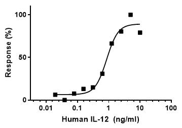 Functional Studies - Recombinant Human IL-12 protein (ab259418)