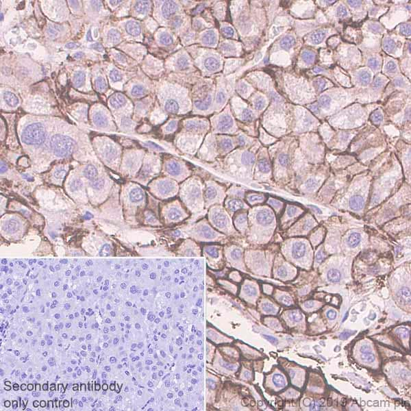 Immunohistochemistry (Formalin/PFA-fixed paraffin-embedded sections) - Anti-Glucose Transporter GLUT2 antibody [EPR22946-74] - BSA and Azide free (ab260003)