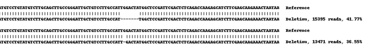 Next Generation Sequencing - Human CD9 knockout A549 cell lysate (ab261687)