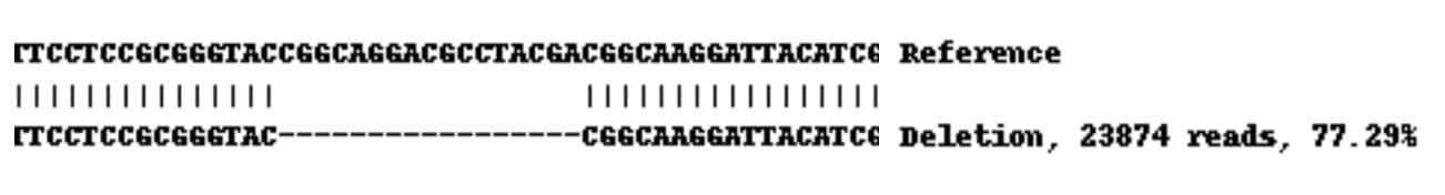 Next Generation Sequencing - Human HLA-A knockout A-431 cell lysate (ab261703)