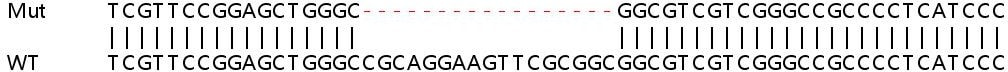 Sanger Sequencing - Human BMP2 knockout HeLa cell line (ab261767)
