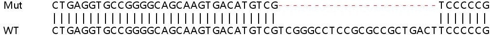 Sanger Sequencing - Human ATG16L1 knockout HeLa cell line (ab261773)