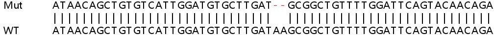 Sanger Sequencing - Human EGF knockout HeLa cell line (ab261830)