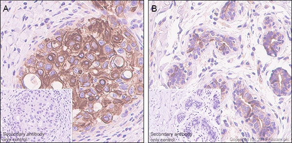 Immunohistochemistry (Formalin/PFA-fixed paraffin-embedded sections) - Anti-Stanniocalcin 2/STC-2 antibody [EPR22866-10] - BSA and Azide free (ab261915)