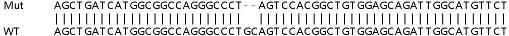 Sanger Sequencing - Human ADCK3 knockout HEK293T cell lysate (ab263078)