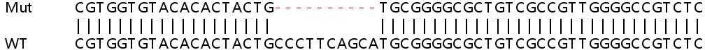 Sanger Sequencing - Human ADCY7 knockout HeLa cell lysate (ab263080)