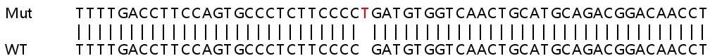 Sanger Sequencing - Human AP1B1 knockout HEK293T cell lysate (ab263089)