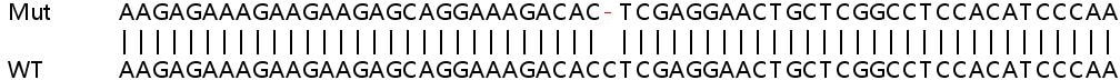 Sanger Sequencing - Human ARL6IP4 knockout HEK293T cell lysate (ab263095)