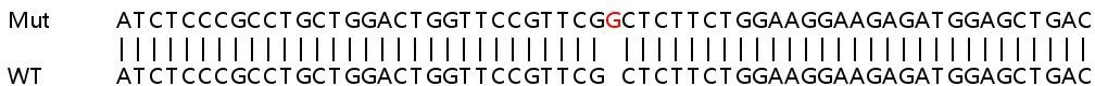 Sanger Sequencing - Human ARL8B knockout HeLa cell lysate (ab263096)