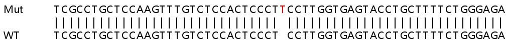 Sanger Sequencing - Human ATP5G2 knockout HEK293T cell lysate (ab263103)