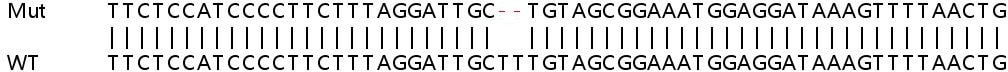 Sanger Sequencing - Human CNKSR3 knockout HEK293T cell lysate (ab263156)