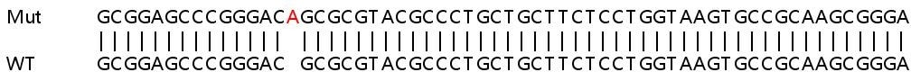 Sanger Sequencing - Human Desmoglein 2 knockout A549 cell lysate (ab263167)