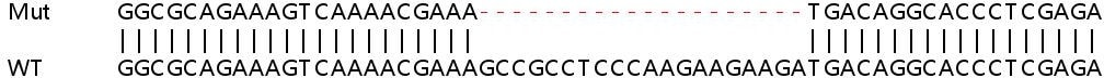 Sanger Sequencing - Human ELOF1 knockout HEK293T cell lysate (ab263186)