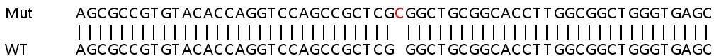 Sanger Sequencing - Human FAM65A knockout HeLa cell lysate (ab263197)