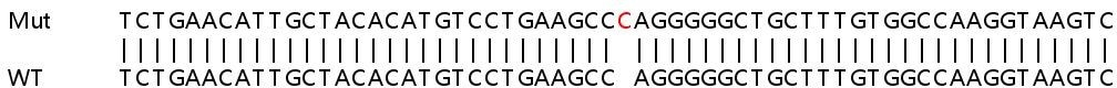 Sanger Sequencing - Human FTSJ1 knockout HEK293T cell lysate (ab263204)