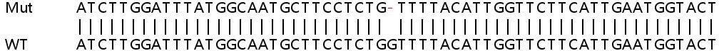 Sanger Sequencing - Human JKAMP knockout HeLa cell lysate (ab263238)