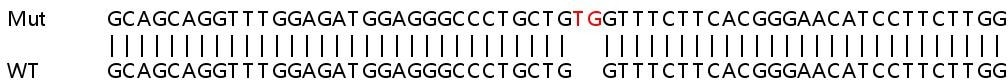 Sanger Sequencing - Human MYL6B knockout HEK293T cell lysate (ab263269)