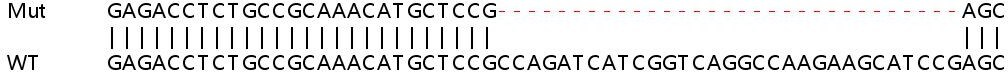 Sanger Sequencing - Human NDUFA4 knockout HEK293T cell lysate (ab263276)