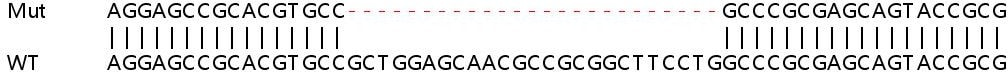 Sanger Sequencing - Human NT5C knockout HEK293T cell lysate (ab263285)