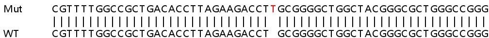 Sanger Sequencing - Human PLEKHA4 knockout A549 cell lysate (ab263300)