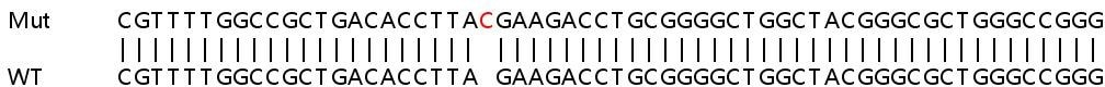Sanger Sequencing - Human PLEKHA4 knockout A549 cell lysate (ab263301)