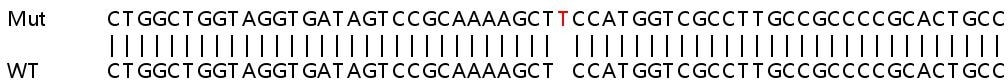 Sanger Sequencing - Human PLK2 knockout HeLa cell lysate (ab263303)