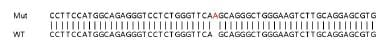 Sanger Sequencing - Human PPM1F knockout HEK293T cell lysate (ab263308)