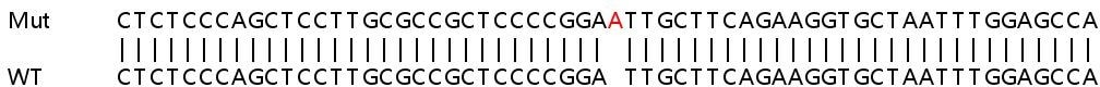 Sanger Sequencing - Human PPP1R15B knockout HeLa cell lysate (ab263309)
