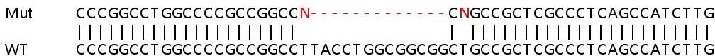 Sanger Sequencing - Human PPP2R4 knockout HEK293T cell lysate (ab263311)