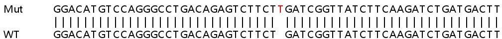 Sanger Sequencing - Human SIPA1L1 knockout HEK293T cell lysate (ab263347)