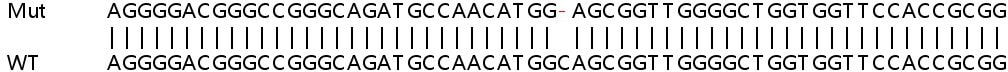 Sanger Sequencing - Human SLC35A2 knockout HeLa cell lysate (ab263353)