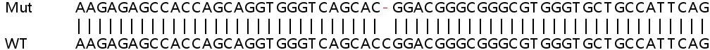 Sanger Sequencing - Human SLC52A2 knockout HeLa cell lysate (ab263357)