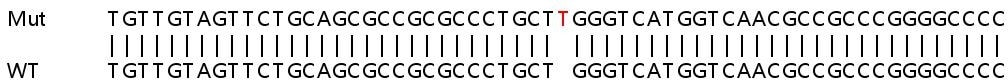 Sanger Sequencing - Human SSNA1 knockout HEK293T cell lysate (ab263367)