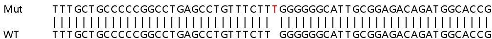 Sanger Sequencing - Human ZC3H15 knockout HEK293T cell lysate (ab263429)
