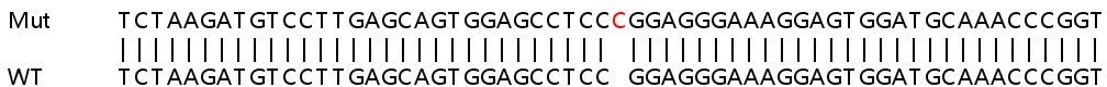 Sanger Sequencing - Human ZNF609 knockout HeLa cell lysate (ab263433)