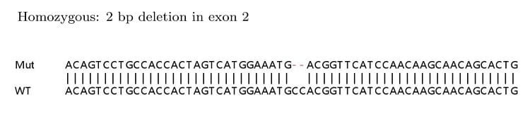 Sanger Sequencing - Human CD68 knockout HeLa cell lysate (ab263753)