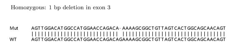 Sanger Sequencing - Human CTNNB1 knockout HeLa cell lysate (ab263756)