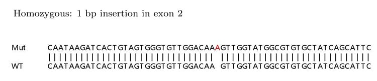 Sanger Sequencing - Human LDHB knockout HEK293T cell lysate (ab263761)