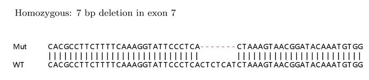 Sanger Sequencing - Human MKI67 knockout HeLa cell lysate (ab263762)