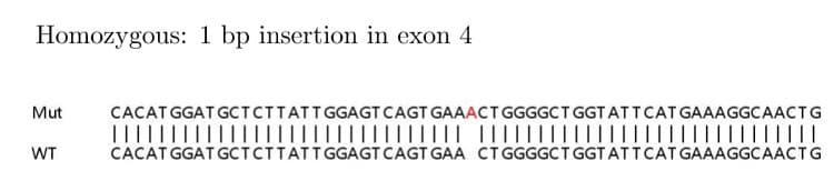 Sanger Sequencing - Human MSH6 knockout HeLa cell lysate (ab263763)