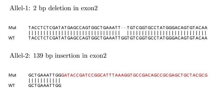 Sanger Sequencing - Human CDK4 knockout HeLa cell lysate (ab263780)