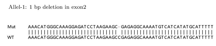 Sanger Sequencing - Human HMGB1 knockout HeLa cell lysate (ab263782)