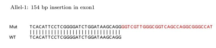 Sanger Sequencing - Human L1CAM knockout HeLa cell lysate (ab263786)