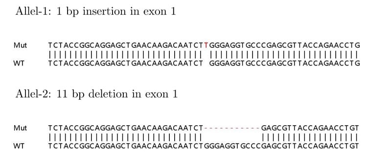 Sanger Sequencing - Human MAPK14 knockout HEK293T cell lysate (ab263787)