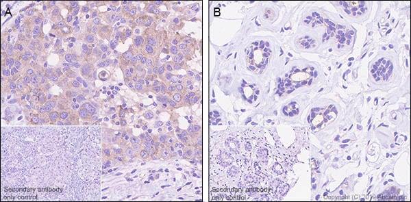 Immunohistochemistry (Formalin/PFA-fixed paraffin-embedded sections) - Anti-Sortilin/NT3 antibody [EPR23093-58] (ab263864)