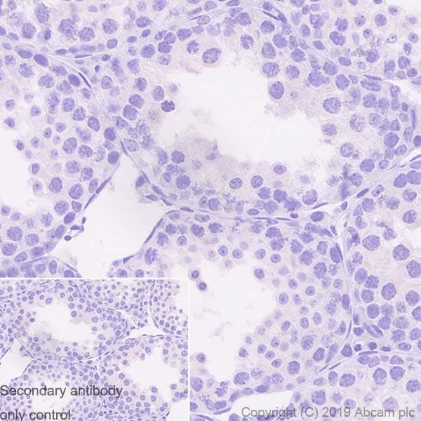 Immunohistochemistry (Formalin/PFA-fixed paraffin-embedded sections) - Anti-SOX1 antibody [EPR23041-60] - BSA and Azide free (ab263870)