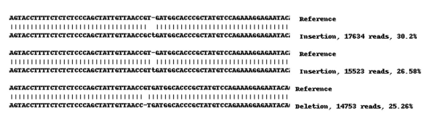 Next Generation Sequencing - Human CD44 knockout HeLa cell lysate (ab263938)