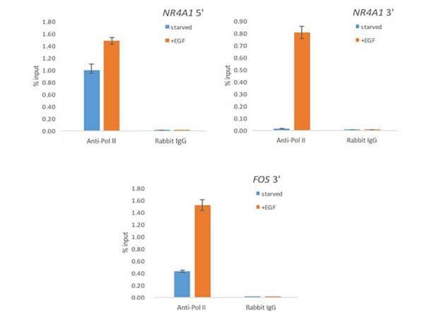 ChIP - Anti-RNA polymerase II CTD repeat YSPTSPS antibody (ab263971)